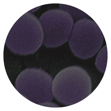 Picture for category Staphylococcus
